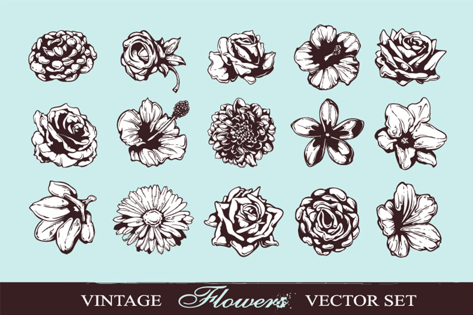 The Versatile Vector Collection