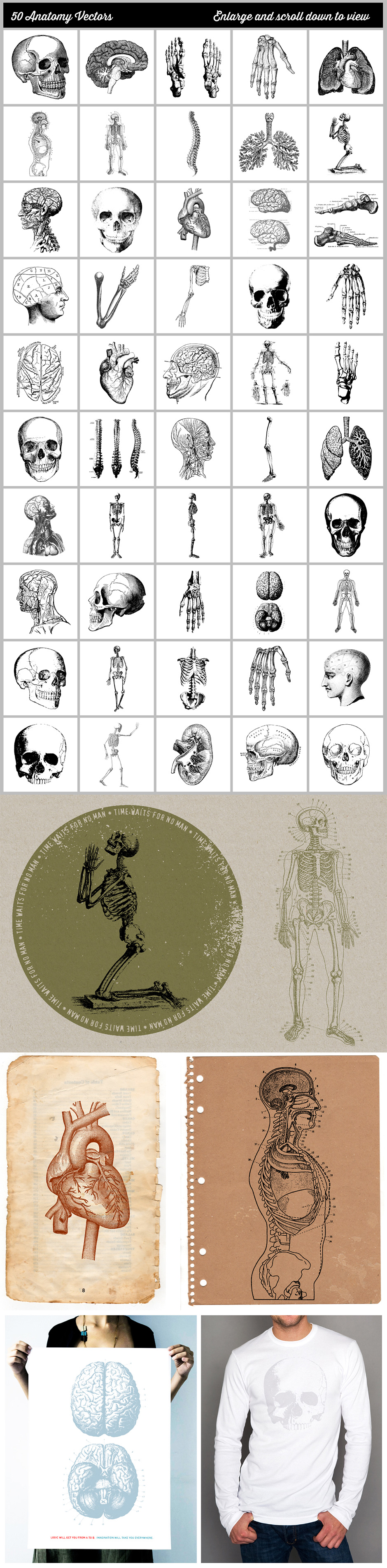 A Vast Collection of 50 Fully Editable Vintage Anatomy Vectors