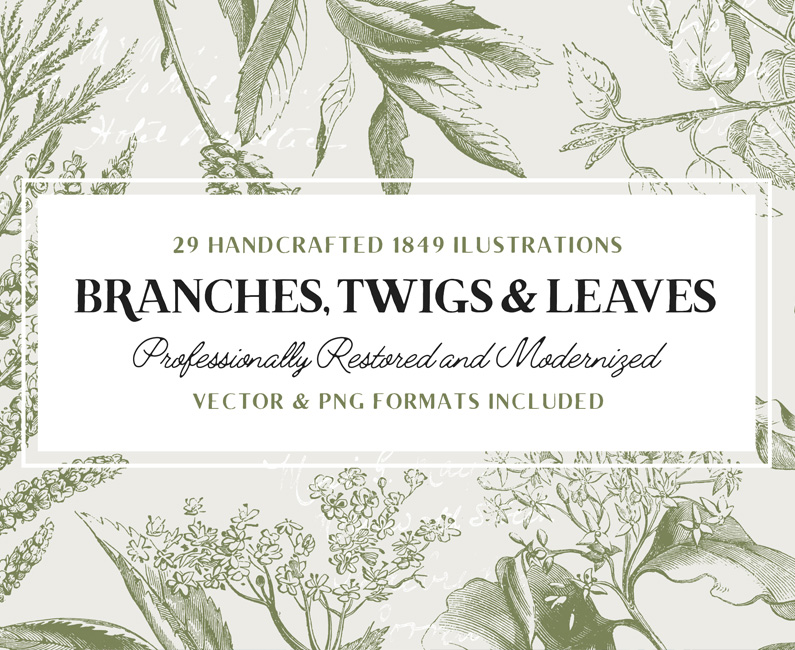 29-branches-vol2-top-image