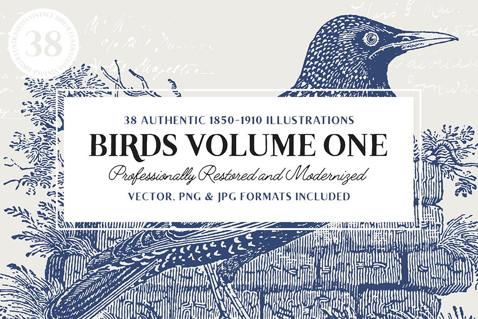 38-birds-vol-1-first-image