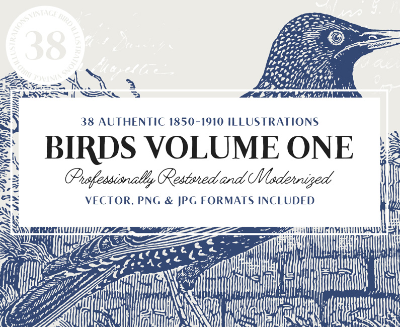 38-birds-vol-1-top-image