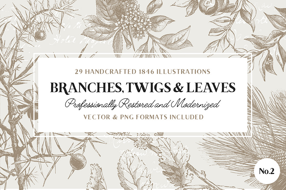 branches-leafs-twigs-first-image
