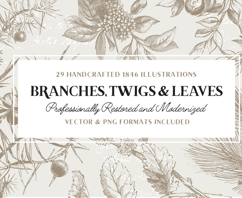 branches-leafs-twigs-top-image
