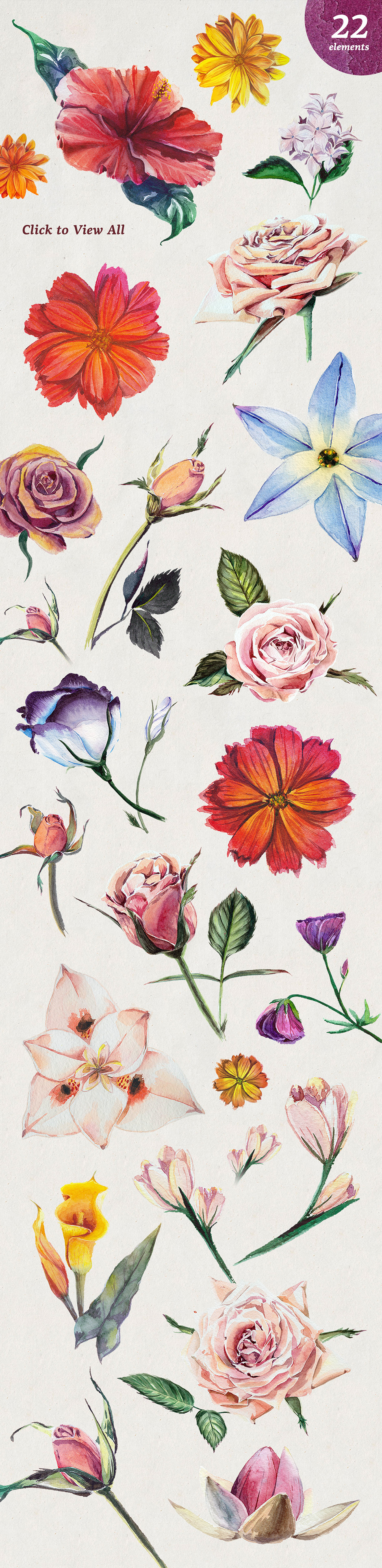 Florist Watercolour Flowers Set