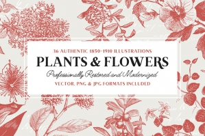 36 Plant and Flower Illustrations