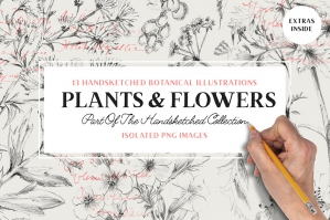 13 Botanical Illustrations + Extras