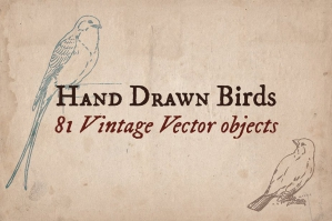 81 Hand-drawn Birds