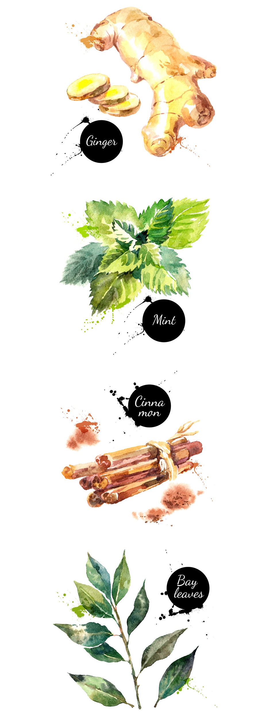 Watercolor Herbs and Spices Vector Set