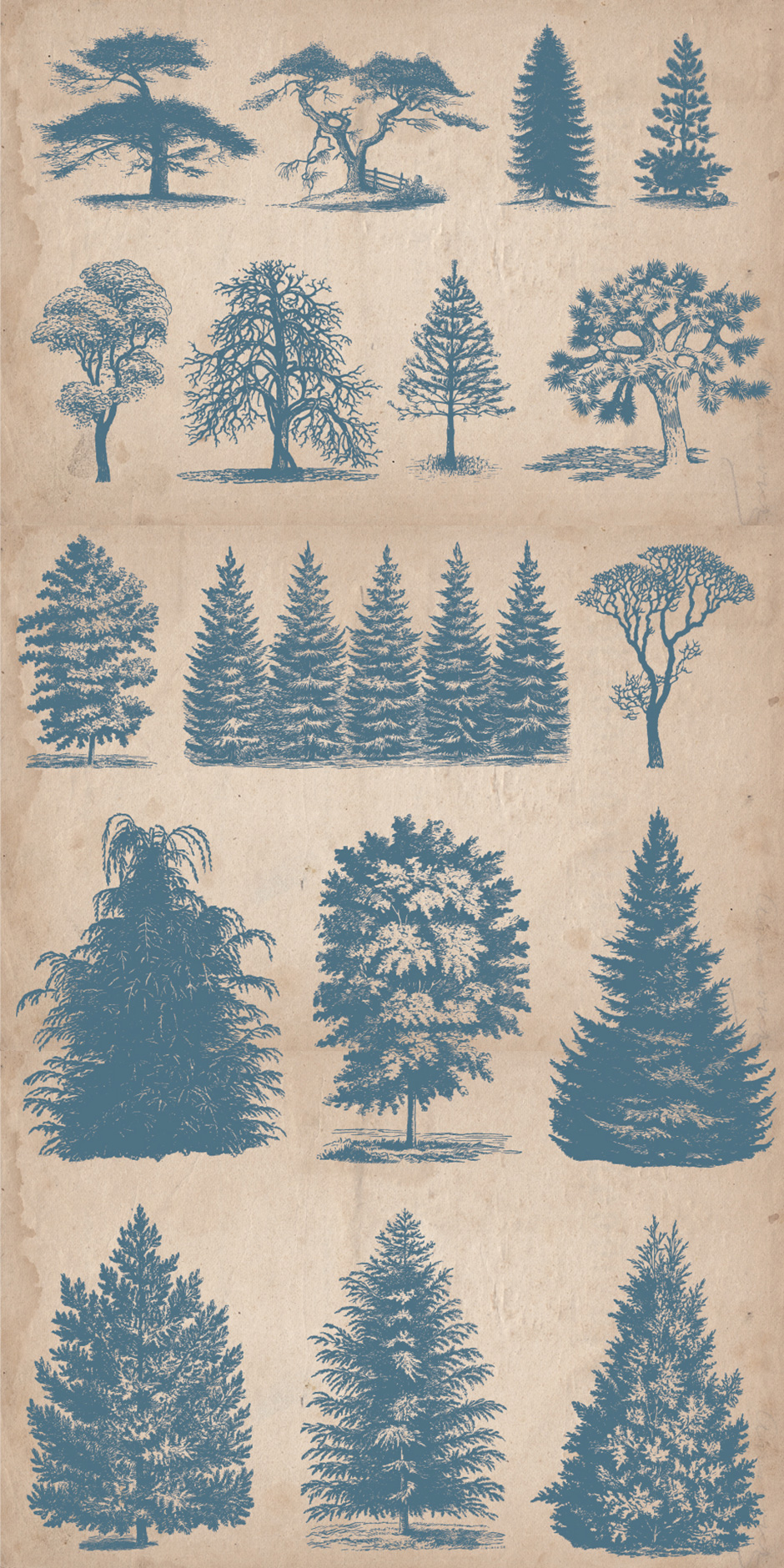 64 Vintage Hand-drawn Trees