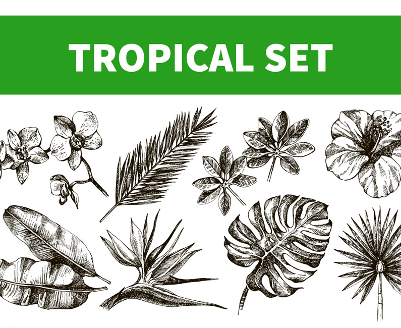 tropical-plants-top-image