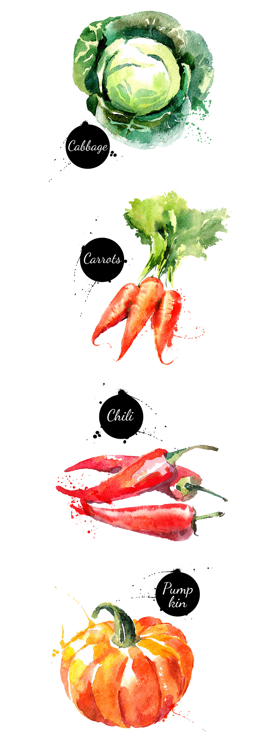 20 Watercolor Vegetables Vector
