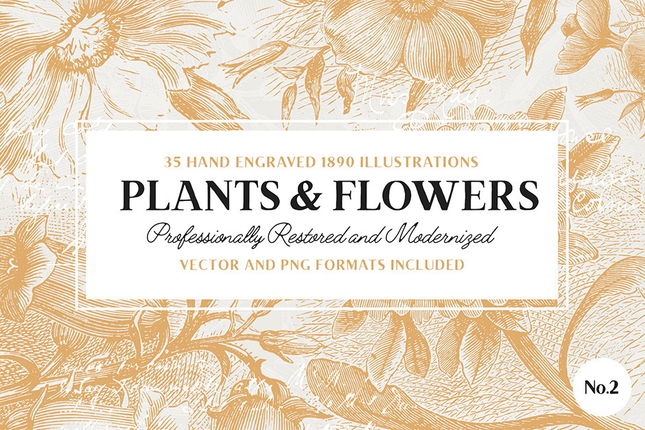 35 Plant Flower Illustrations No. 2