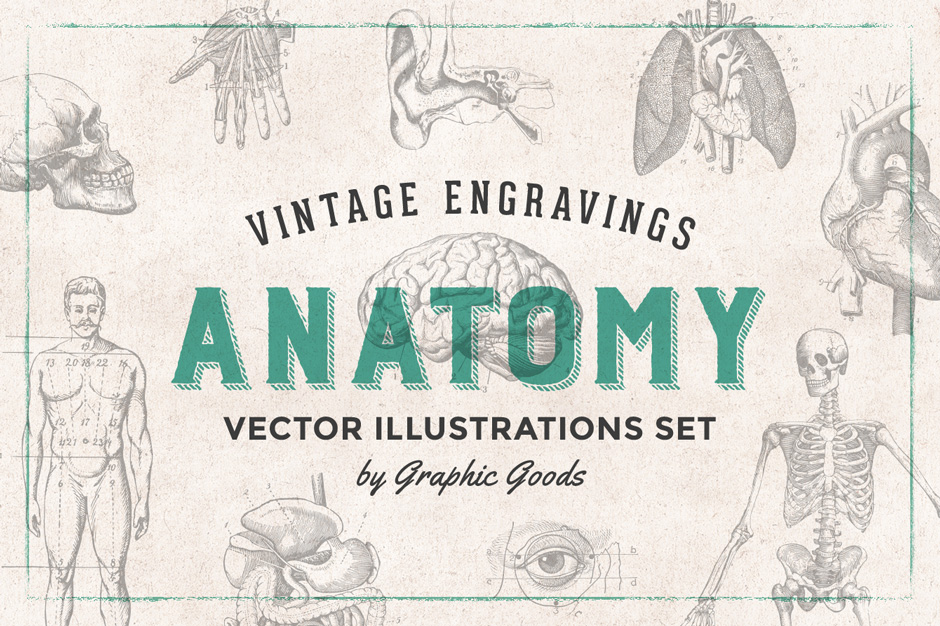 76 Anatomy Vintage Engravings - Design Cuts