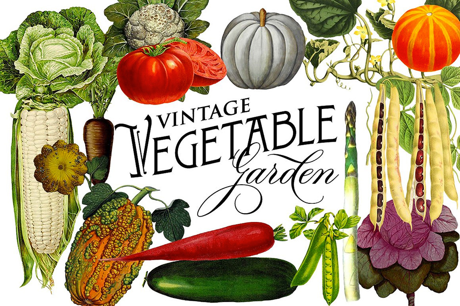 Vintage-Vegetable-first-image