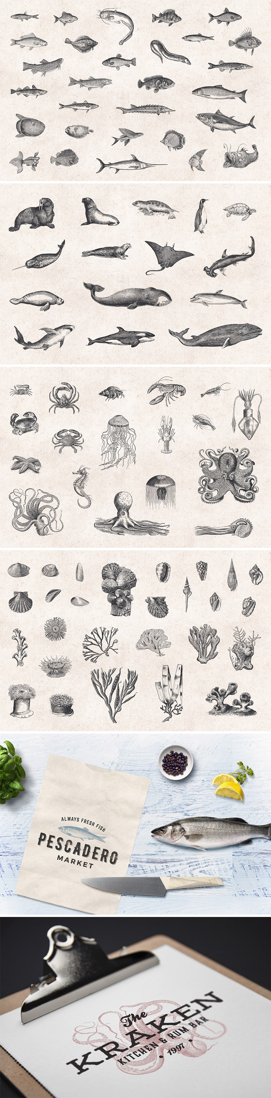 Fishes & Sea Life Engravings