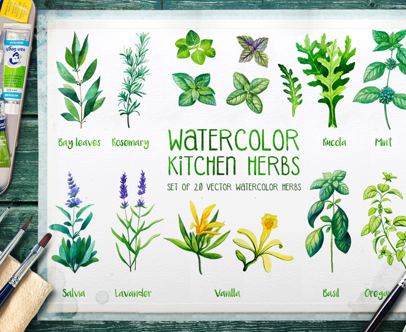 watercolour-herbs-top-image