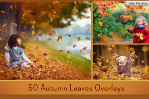 50 Autumn Leaves Overlays