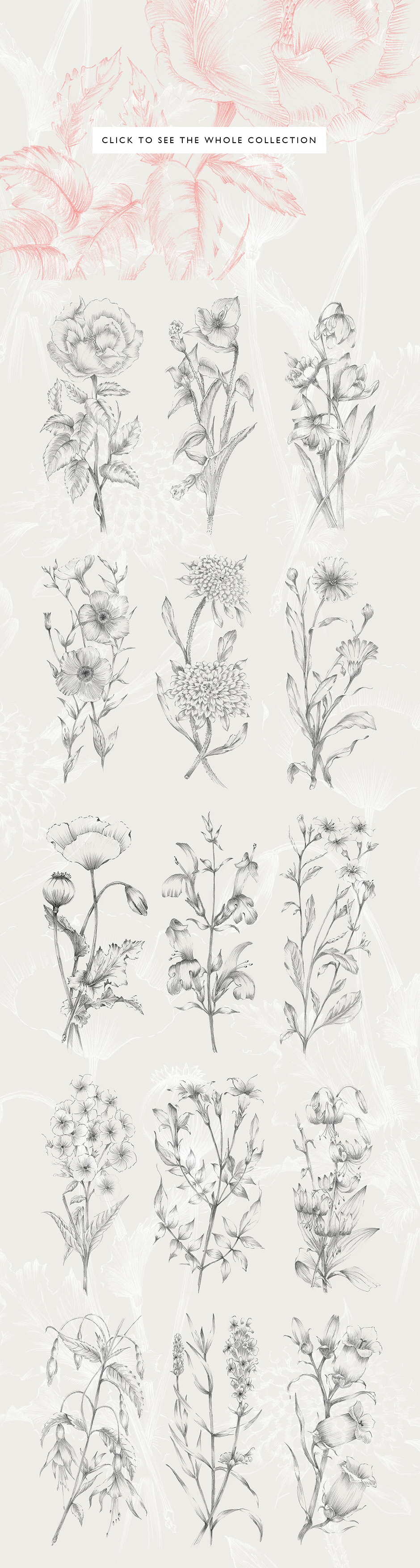 botanical-sketches-preview-2-full-