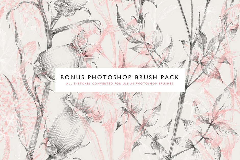 botanical-sketches-preview-5-