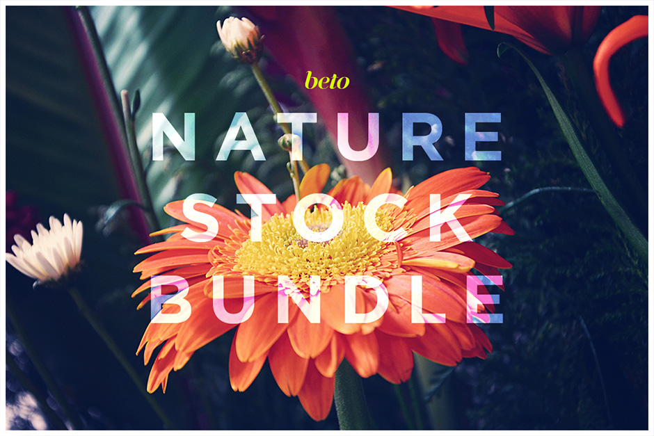 Nature Scenery Stock Bundle