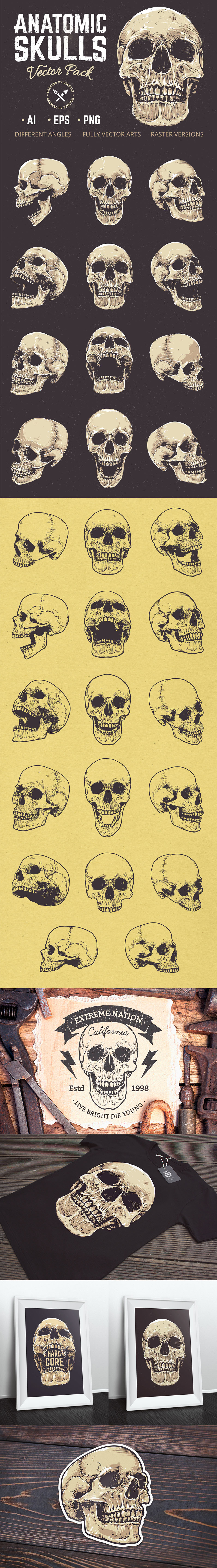 Anatomic Vector Skulls Pack