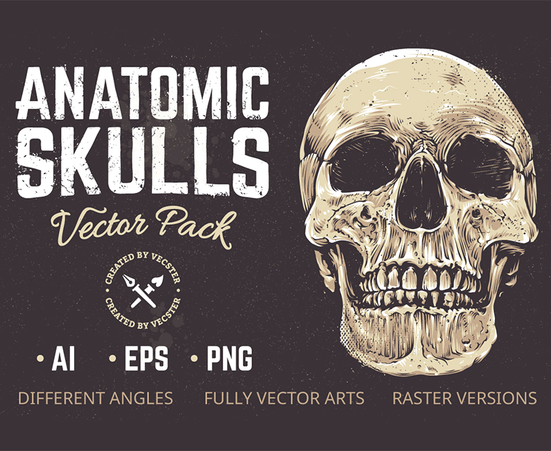Anatomic Skulls_Top