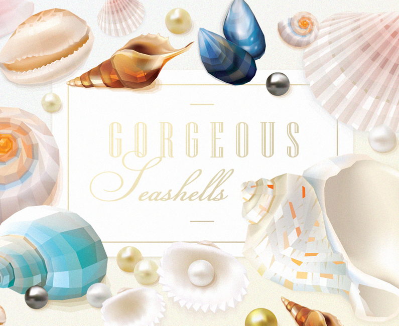 gorgeous-seashells-top