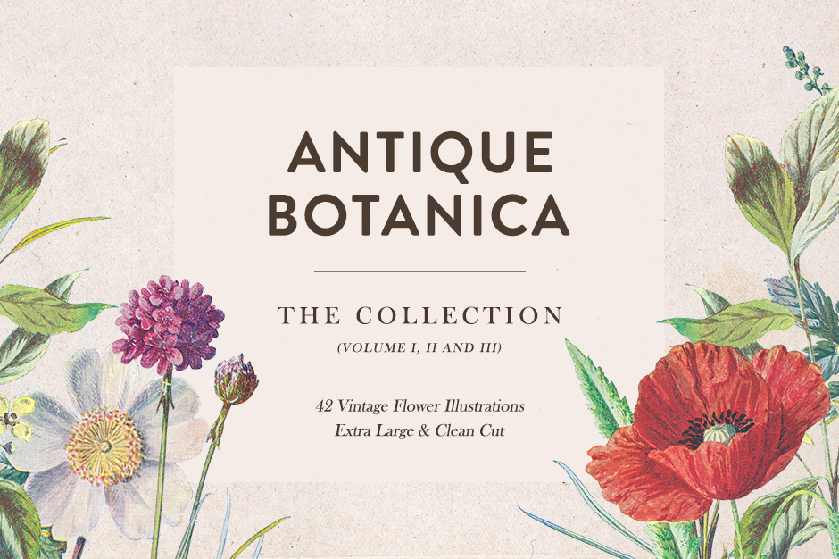 Antique-Botanica-main