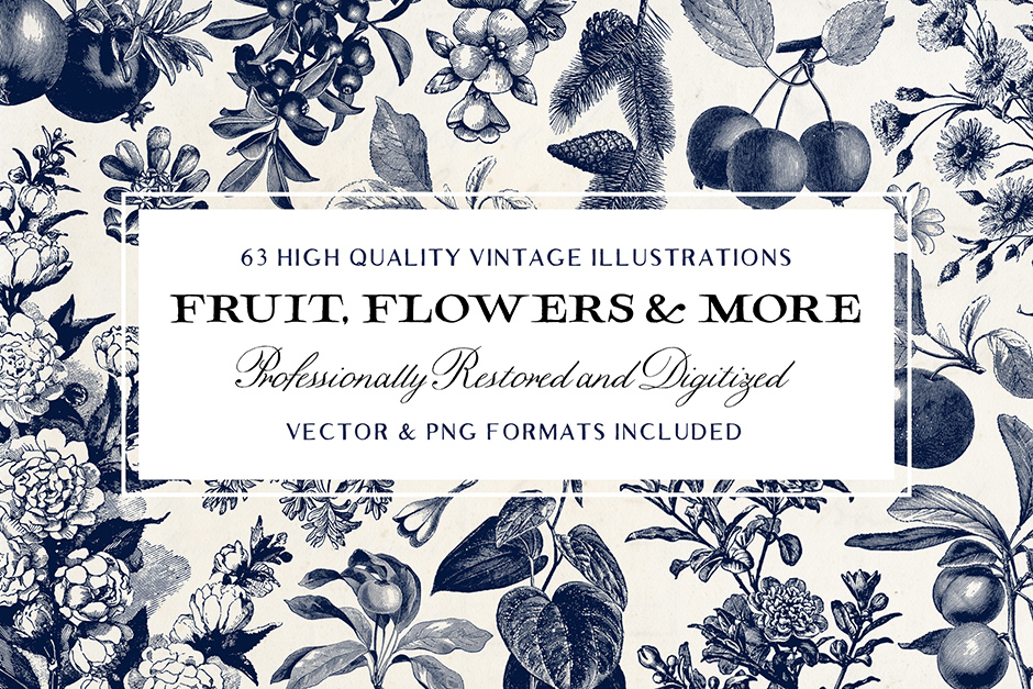 Fruit-&-Flower-Illustrations-and-more!-main