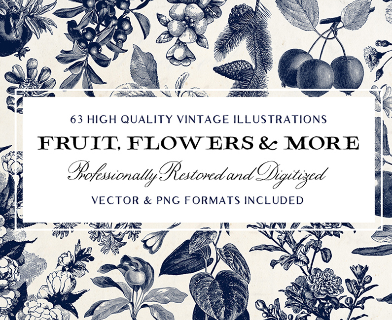 Fruit-&-Flower-Illustrations-and-more!-top