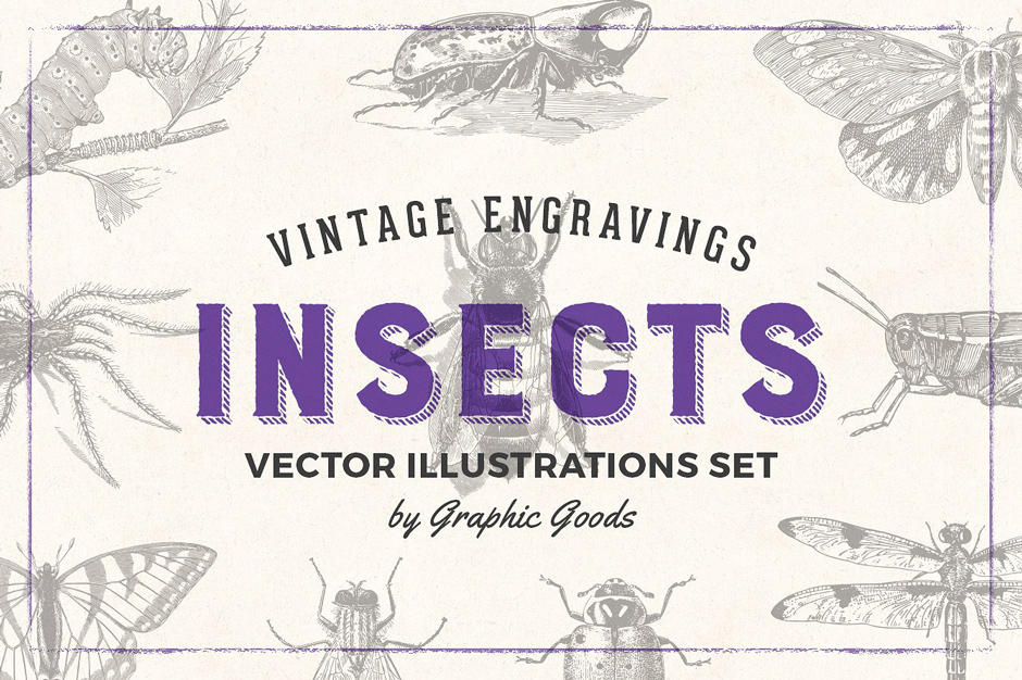 Insects-Vintage-Illustrations