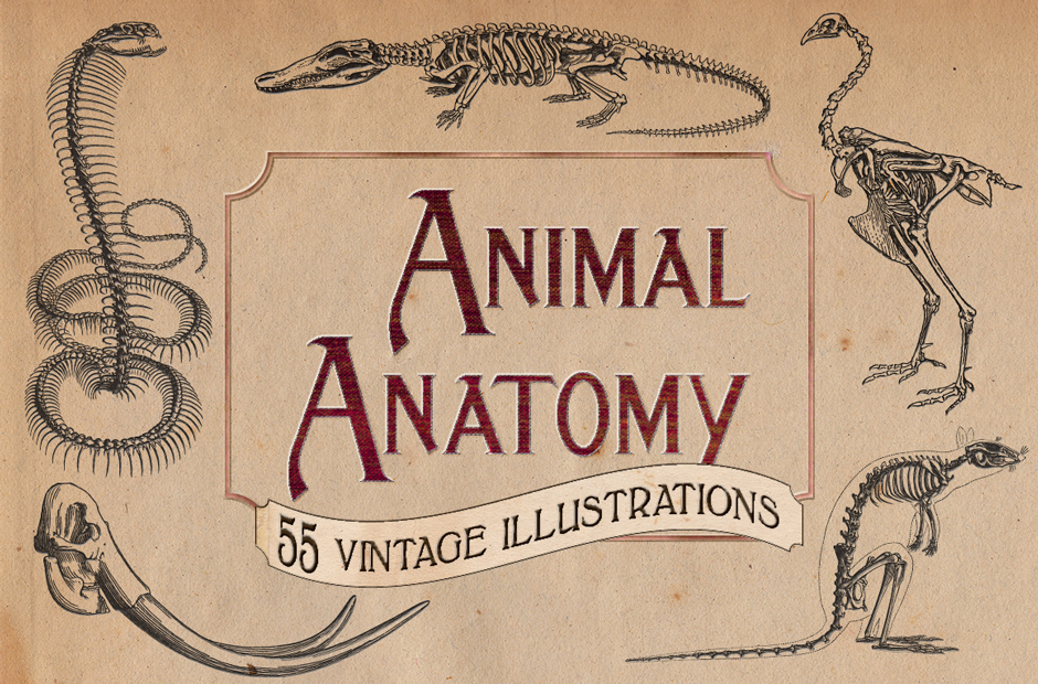 Vintage-Animal-Anatomy-Vectors-main