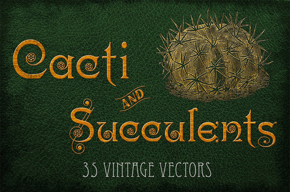 Vintage-Cacti-and-Succulents-main