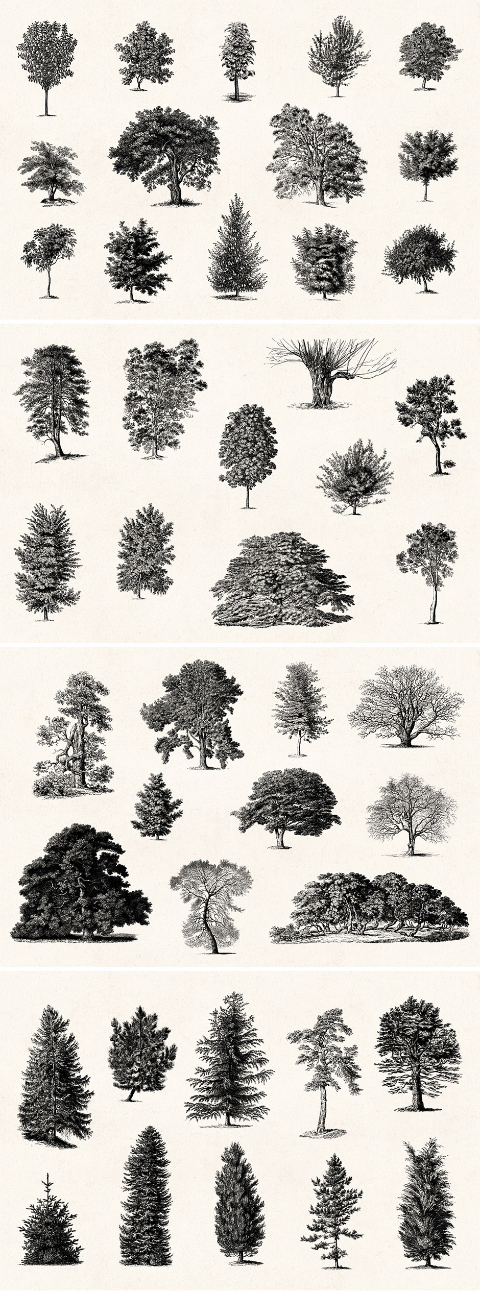 …Vintage Tree Illustrations Set