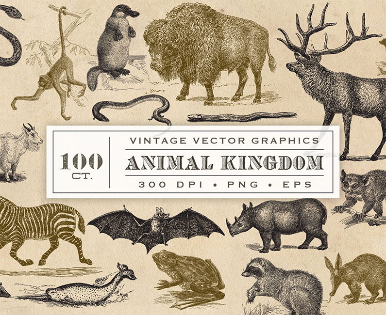 animal-kingdom-top