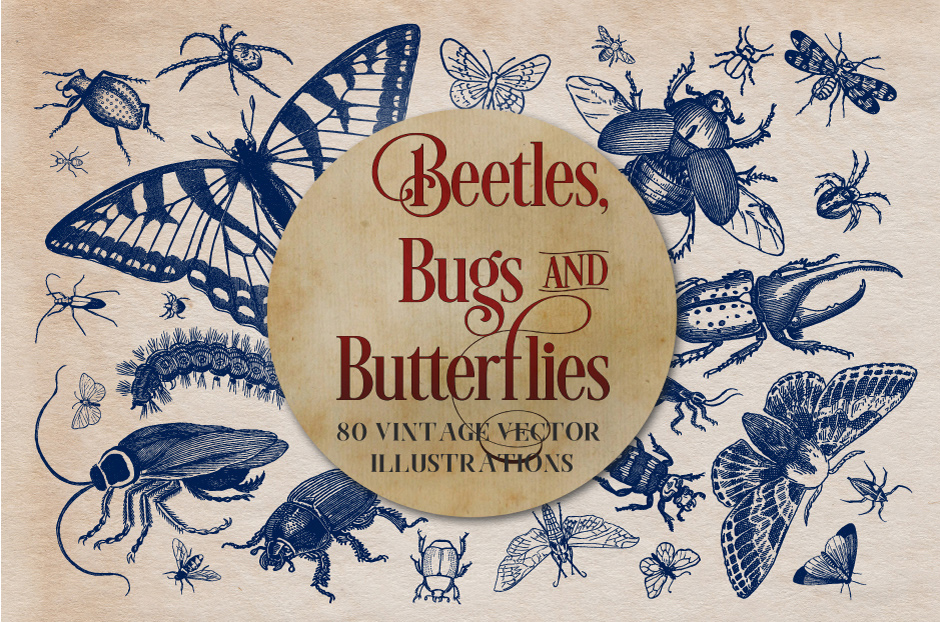 vintage-insects-and-butterflies-main