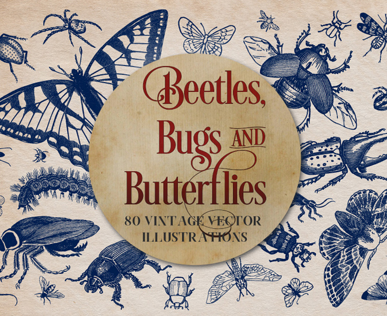 vintage-insects-and-butterflies-top