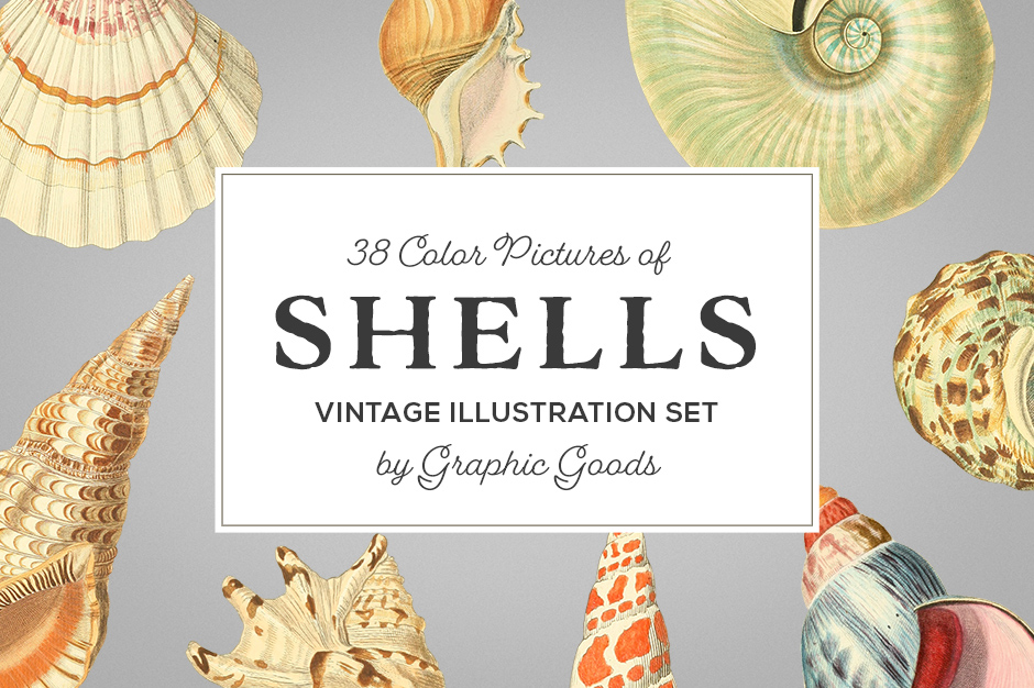 color-shells-first-image