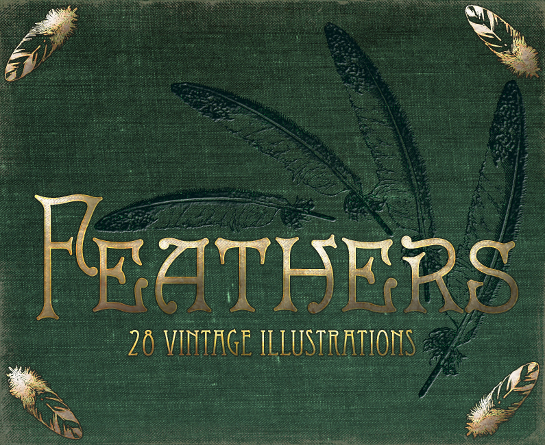 feathers_795 x 650