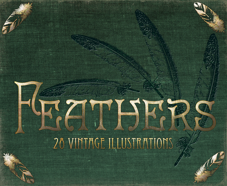 feathers_940x768