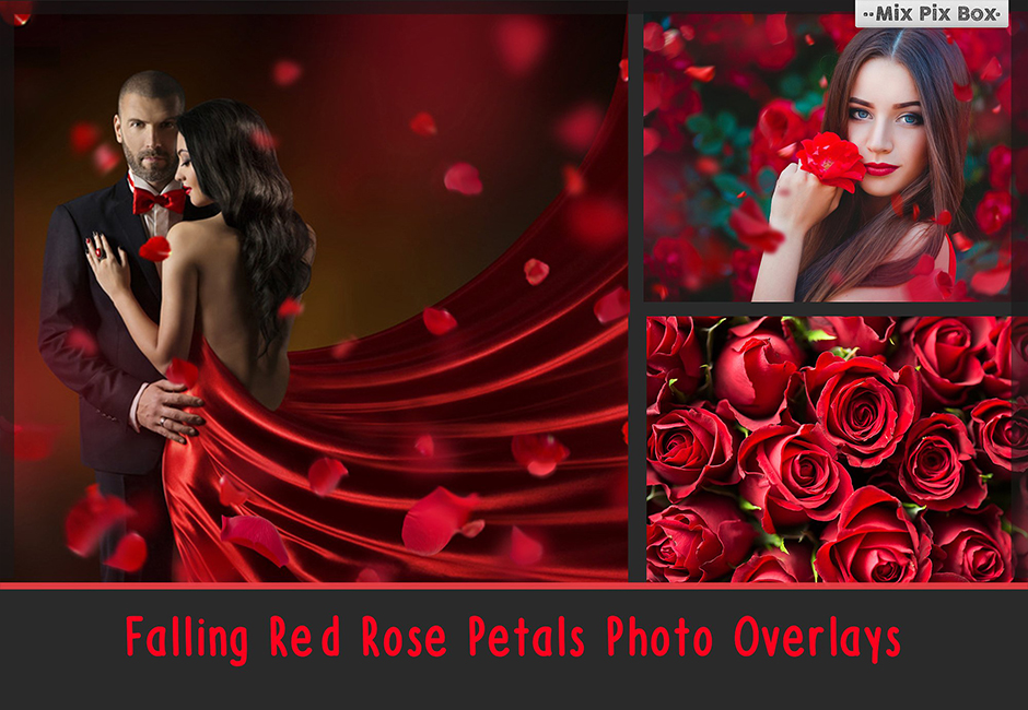 Falling Rose Petals Photo Overlays