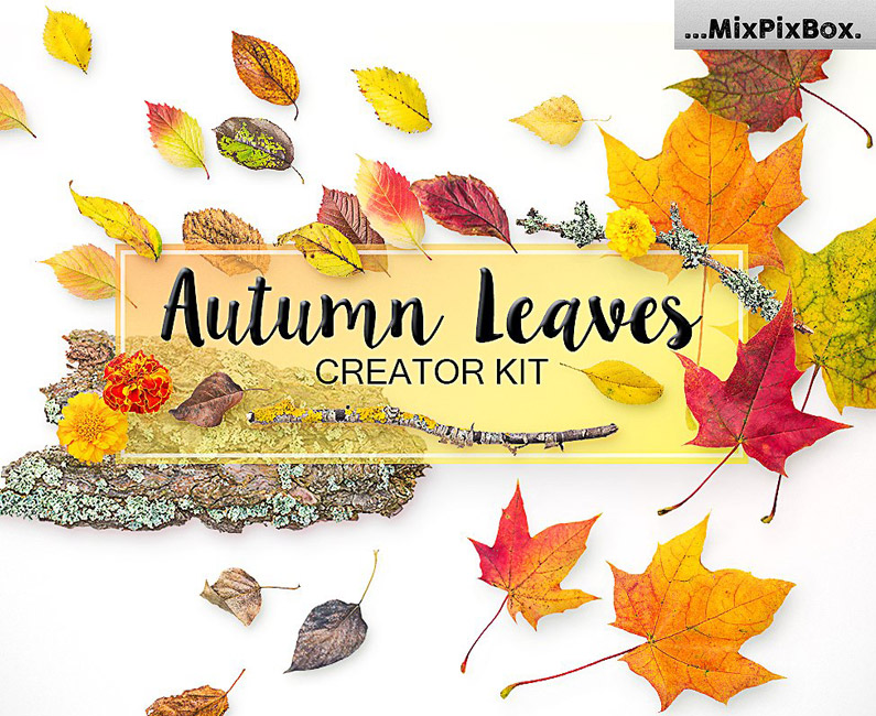 autumn-leaves-TOP