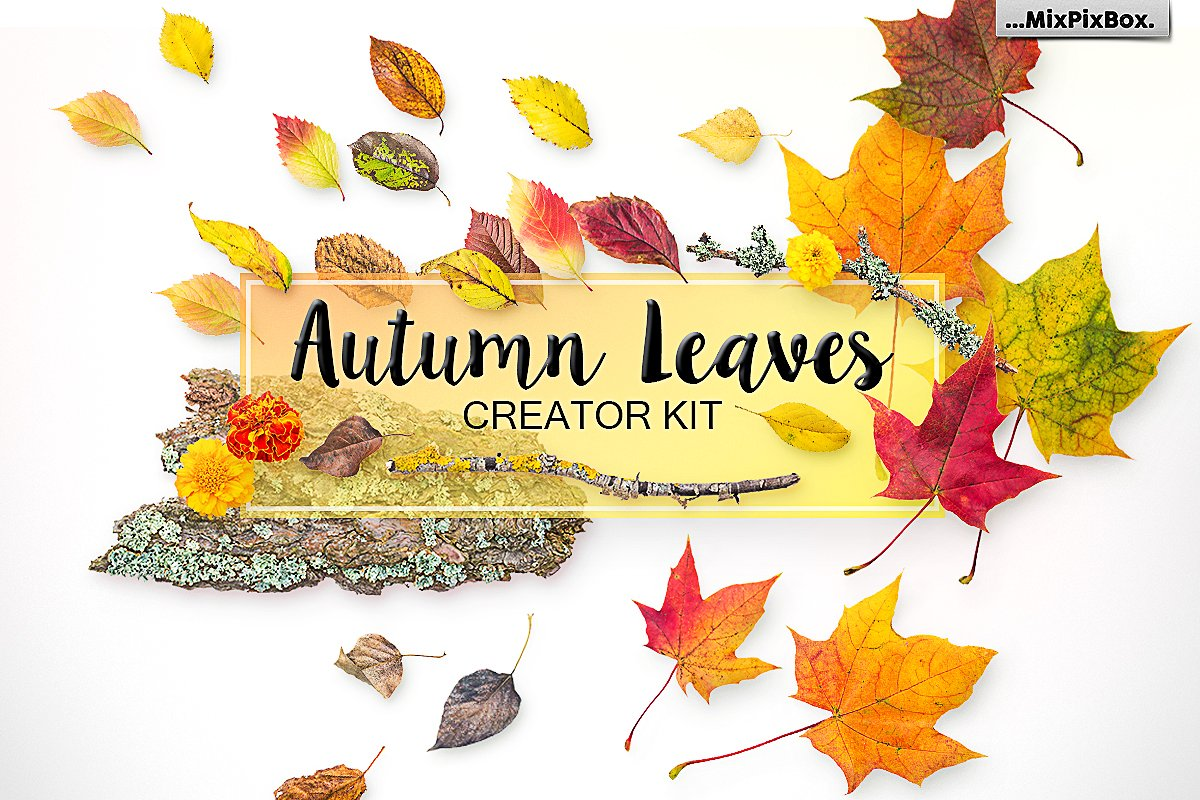 autumn-leaves-cover