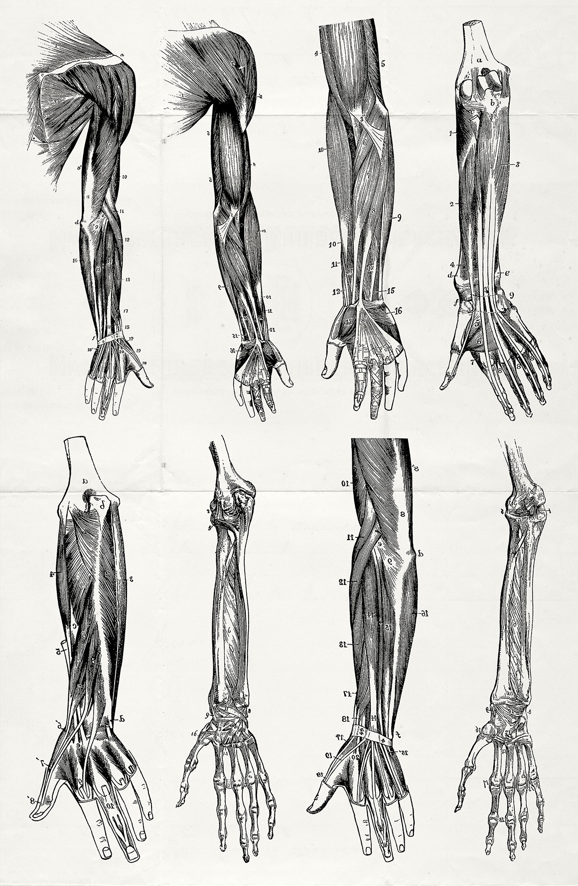 76 Vintage Anatomy Illustrations