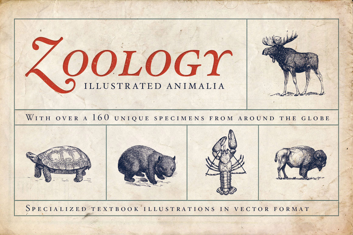 Zoology – Vintage Animal Illustrations
