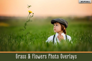 Grass-and-Flowers-Photo-Overlays-cover