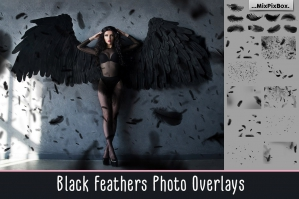Black-Feather-Overlays-cover