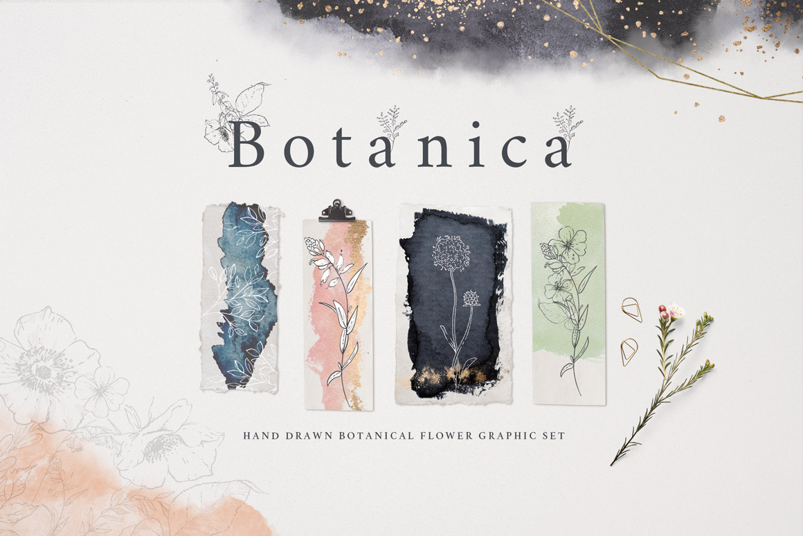 Botanical Graphic Collection