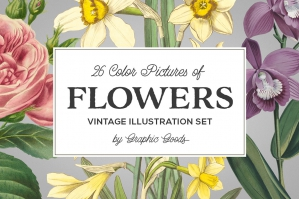 Vintage Color Illustrations of Flowers
