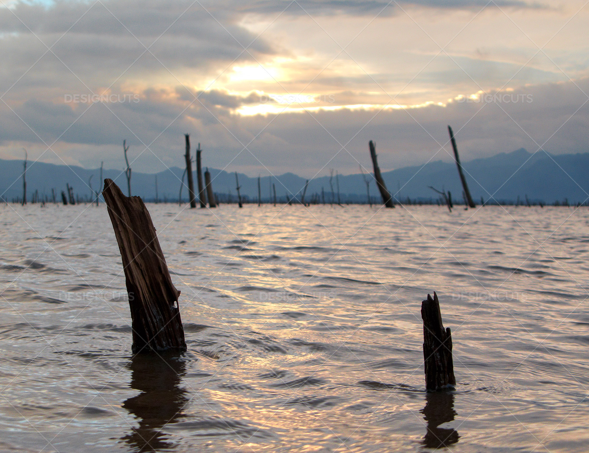 Storm Clouds Over Sunken Trees In Calm Lake